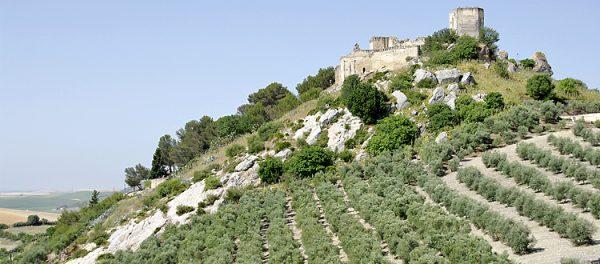 Commande d'huile d'olive d'Andalousie