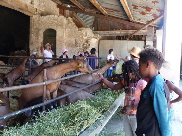 Un rendez-vous du Bien Manger à la ferme